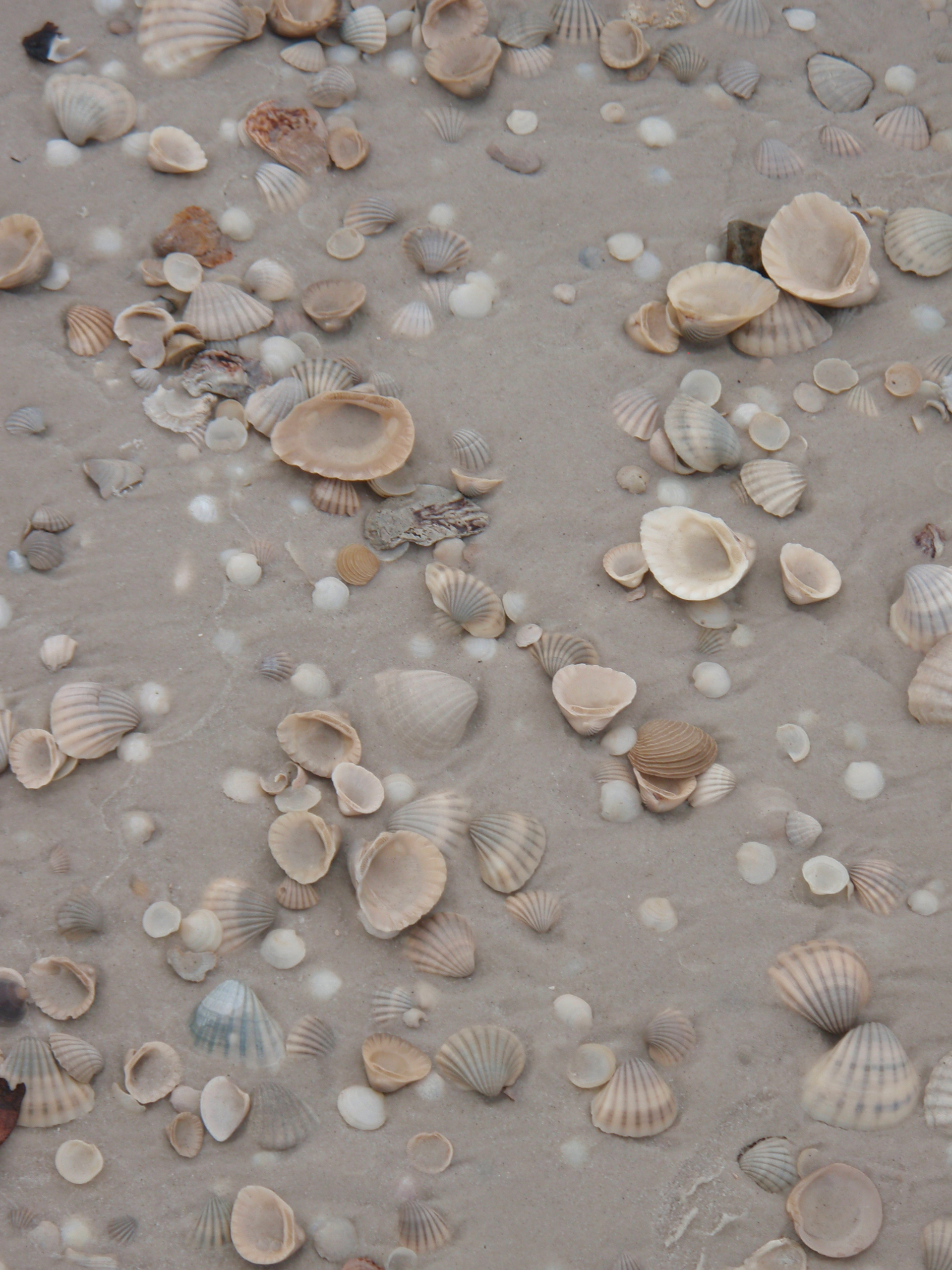 Shells on the Beach; Port Gentil, Gabon; 2010
