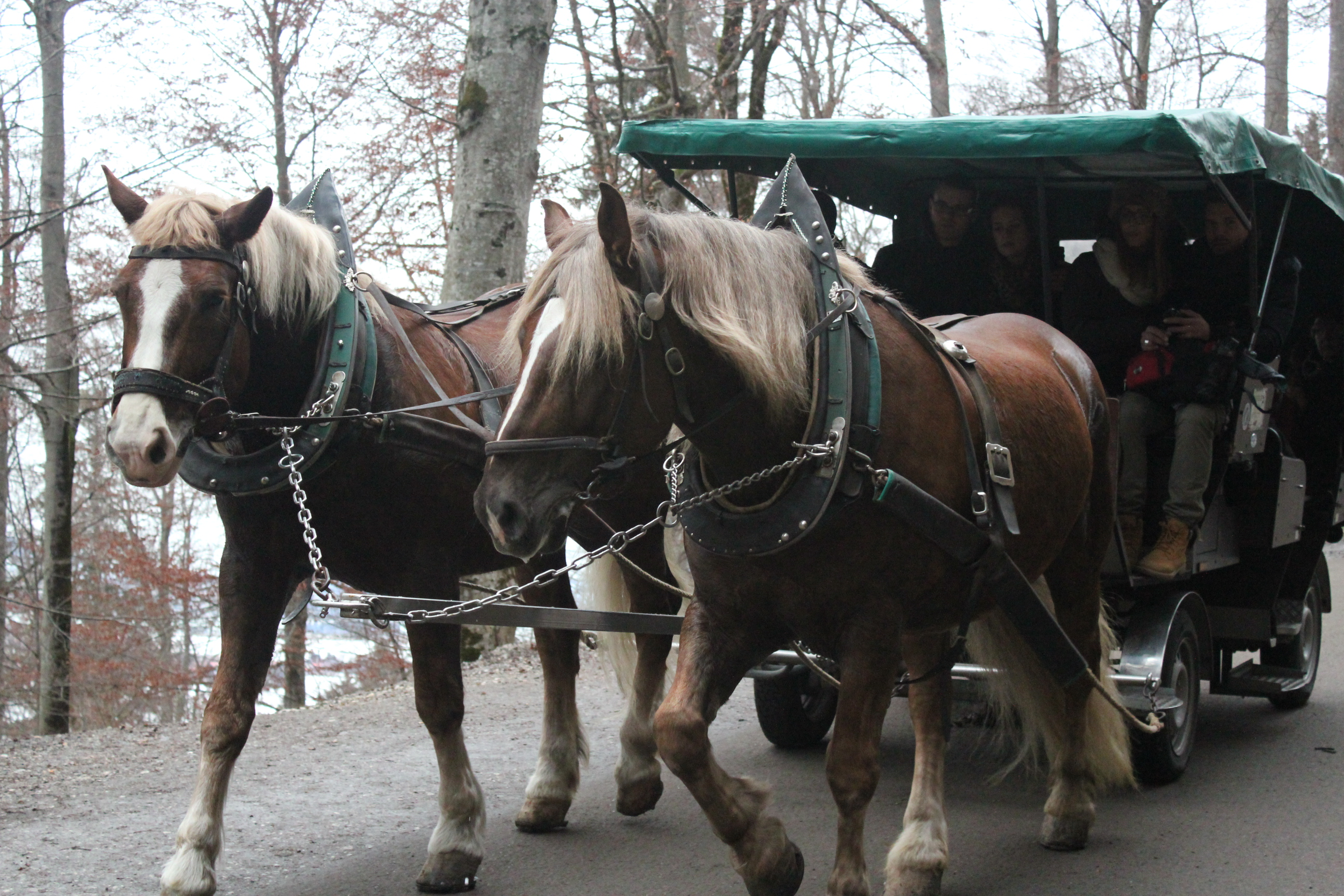 Horse Carriage to Neuschwanstein Castle; Schwangau Village, Germany; 2012