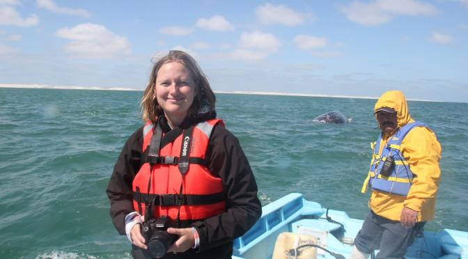 Grey Whale Migration; Guerrero Negro, Mexico; 2012