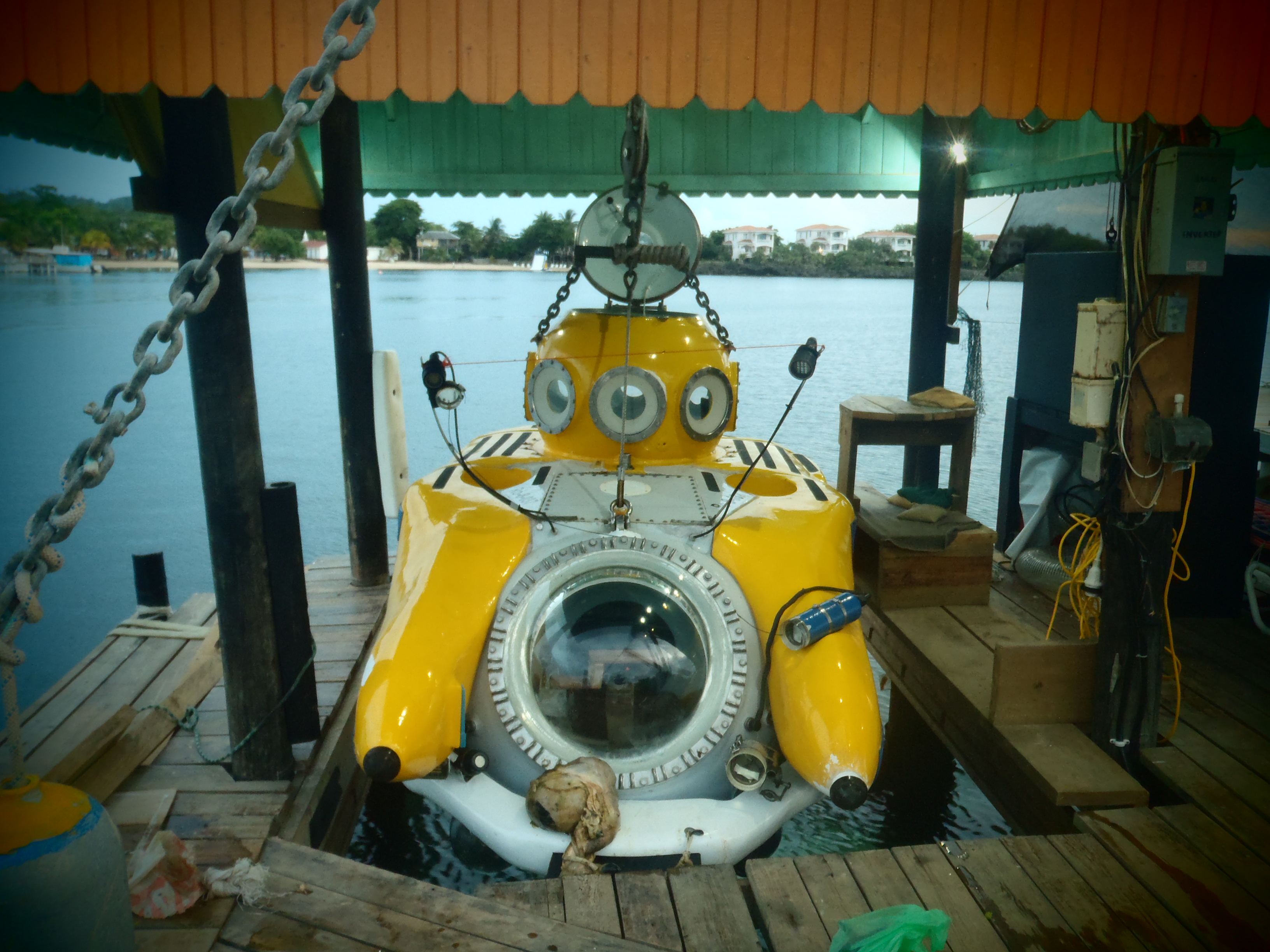 Yellow Submarine Prepped with Cow Organs; Roatan, Honduras; 2013