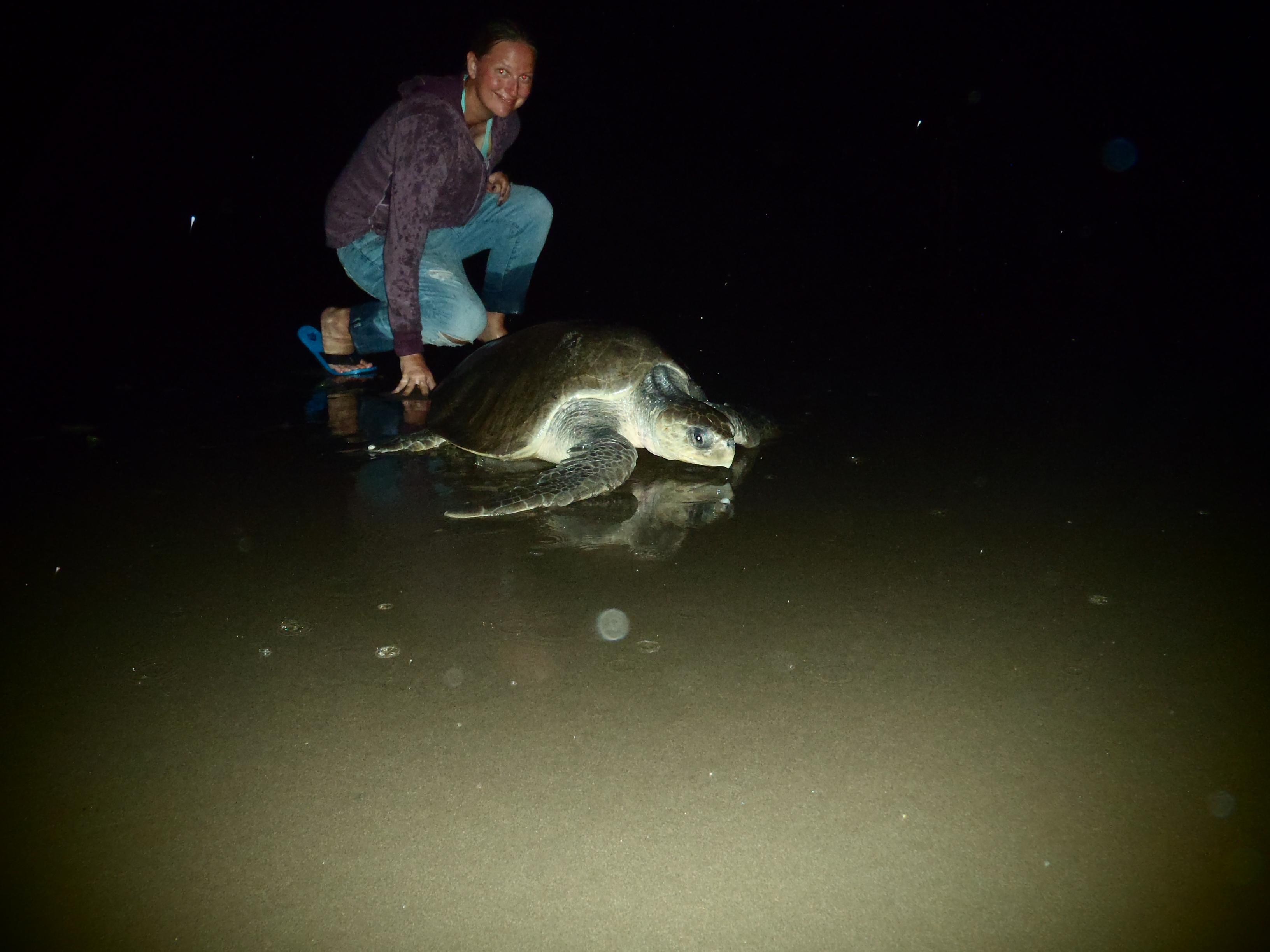 Olive Ridley Sea Turtle; Isla Los Brasiles, Nicaragua; 2013