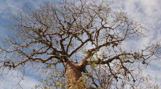 Republic of Madagascar: The Land of Baobab Trees