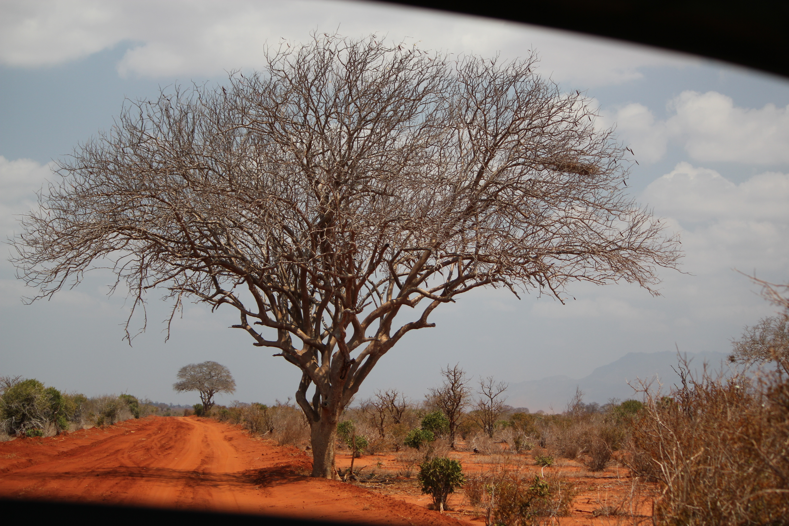 Picturesque; East Tsavo National Park, Kenya; 2011