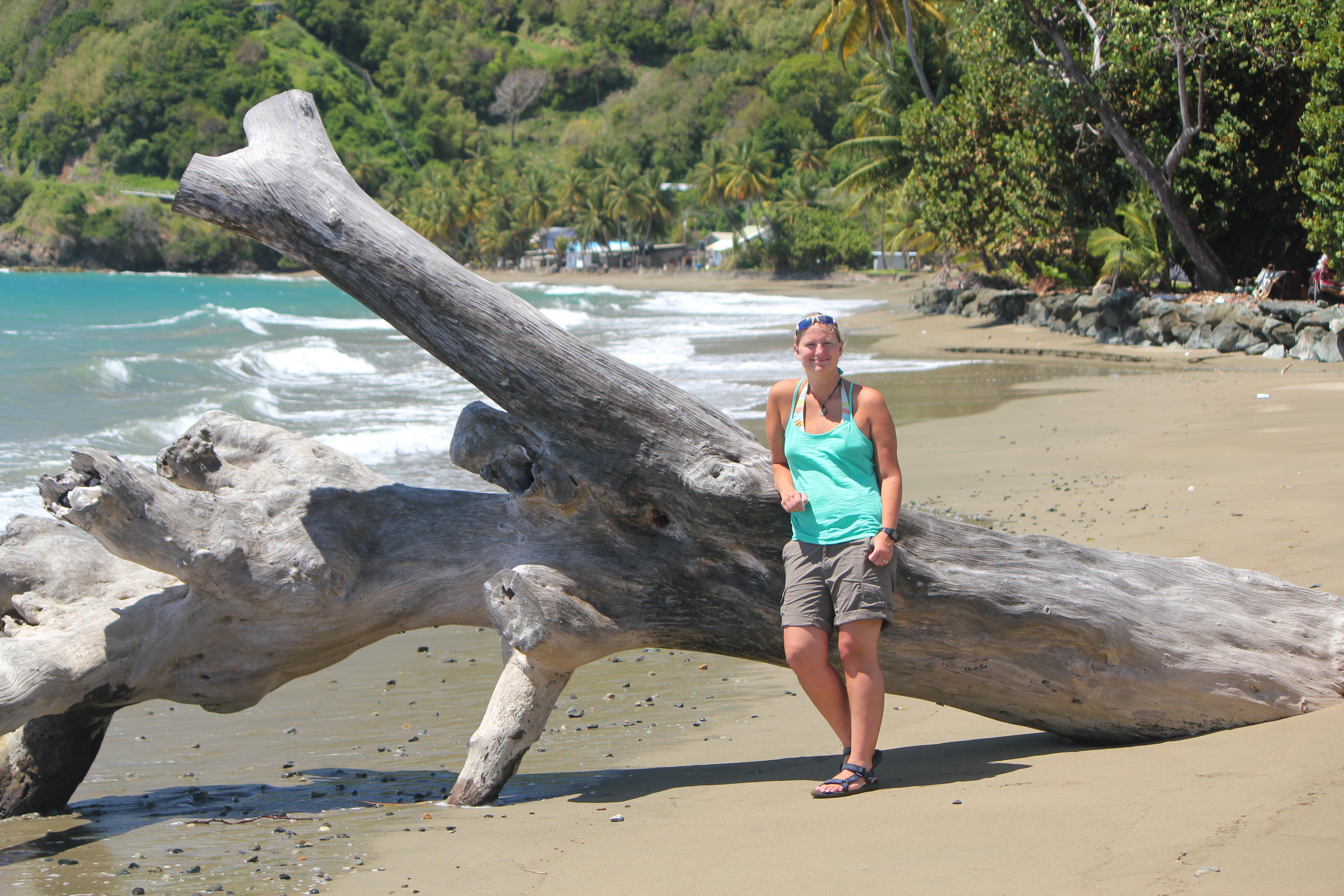 Driftwood; Tobago; 2011
