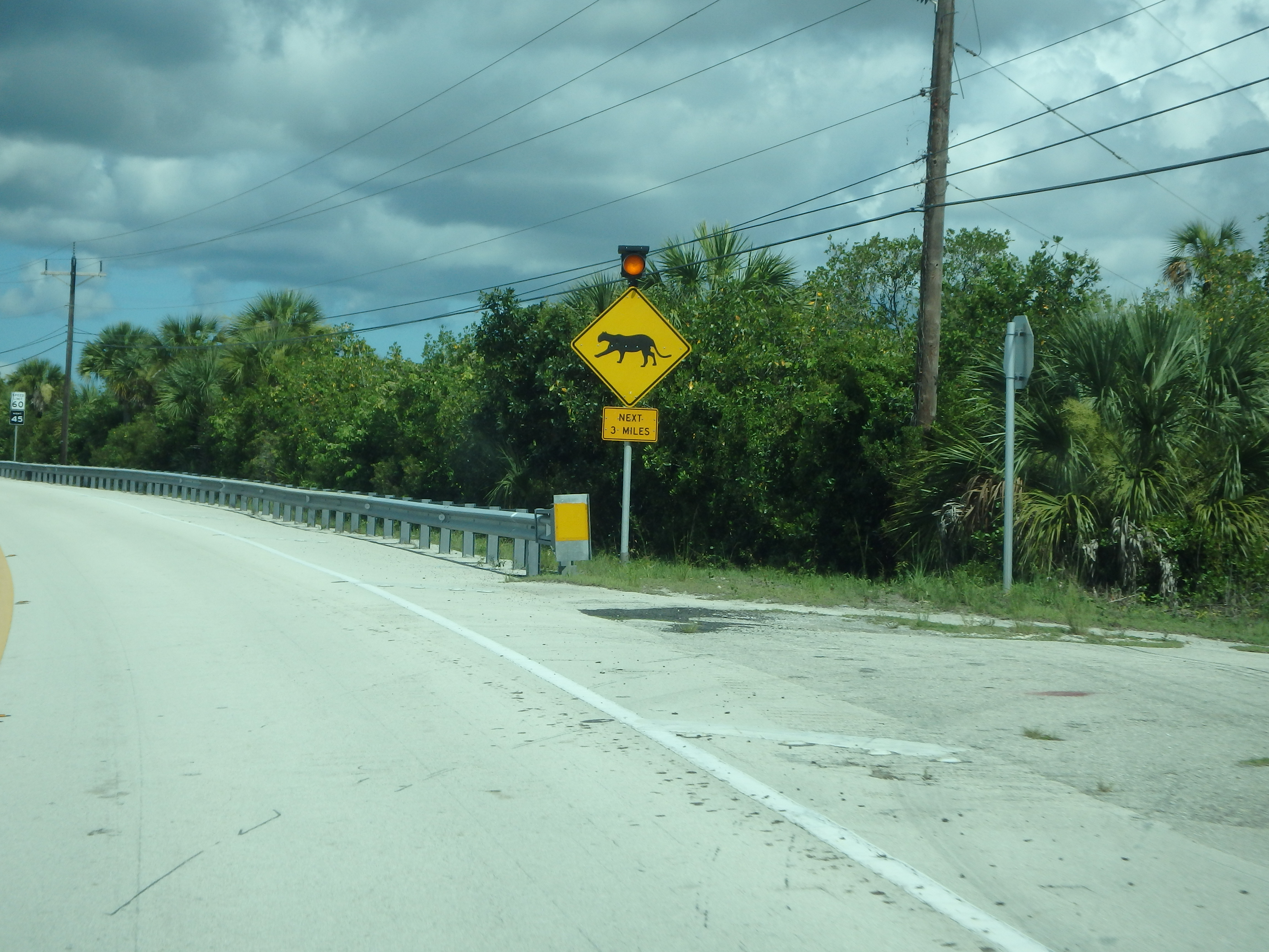 "Black Panther Crossing; ""Alligator Alley,"" Florida; 2015"