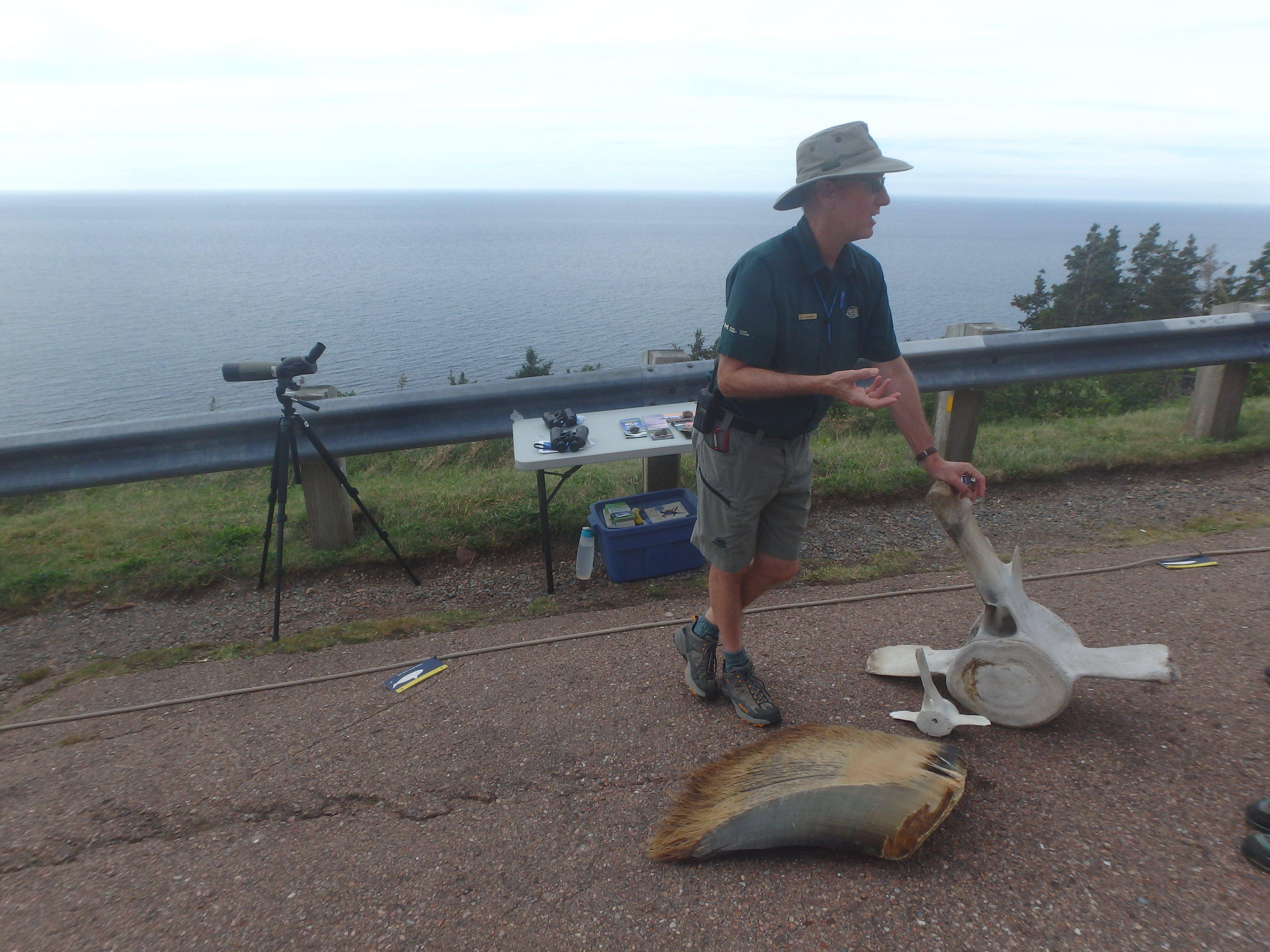 Conservationist with Fin Whale and Pilot Whale Bones + Baleen; Cape Breton Highlands National Park; 2015