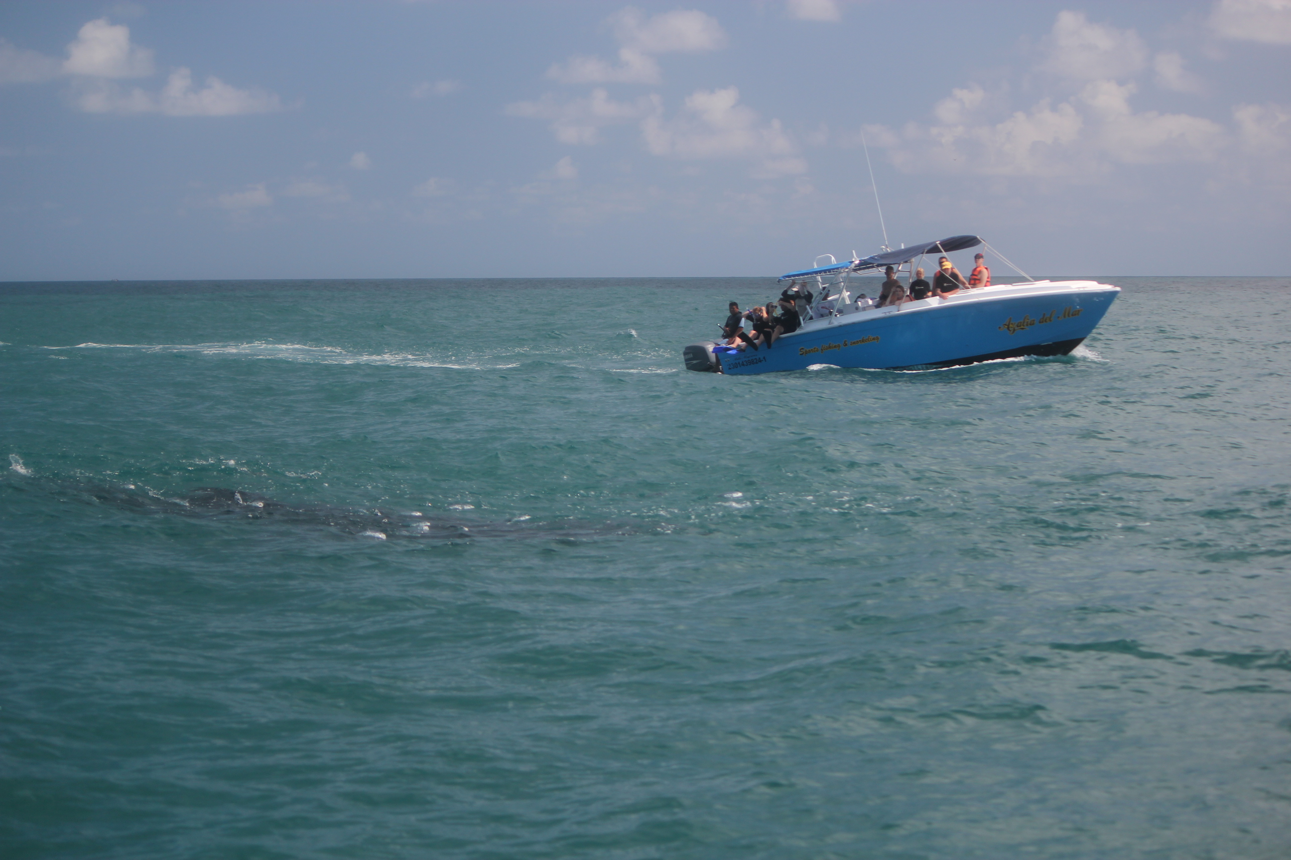 Whale Shark Expedition (Boat & Whale Shark); Cancun, Mexico; 2011